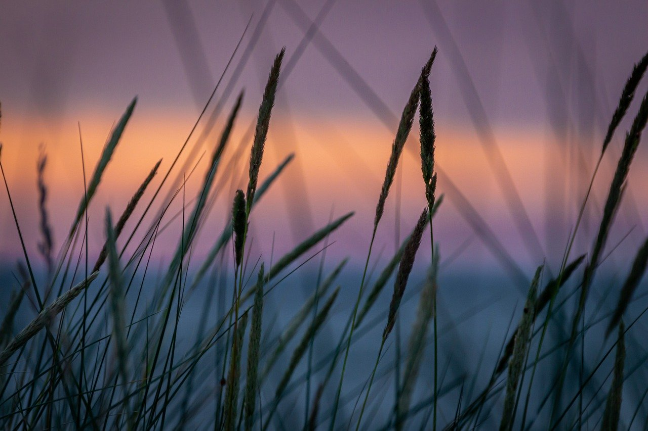 abendstimmung, sunset, landscape
