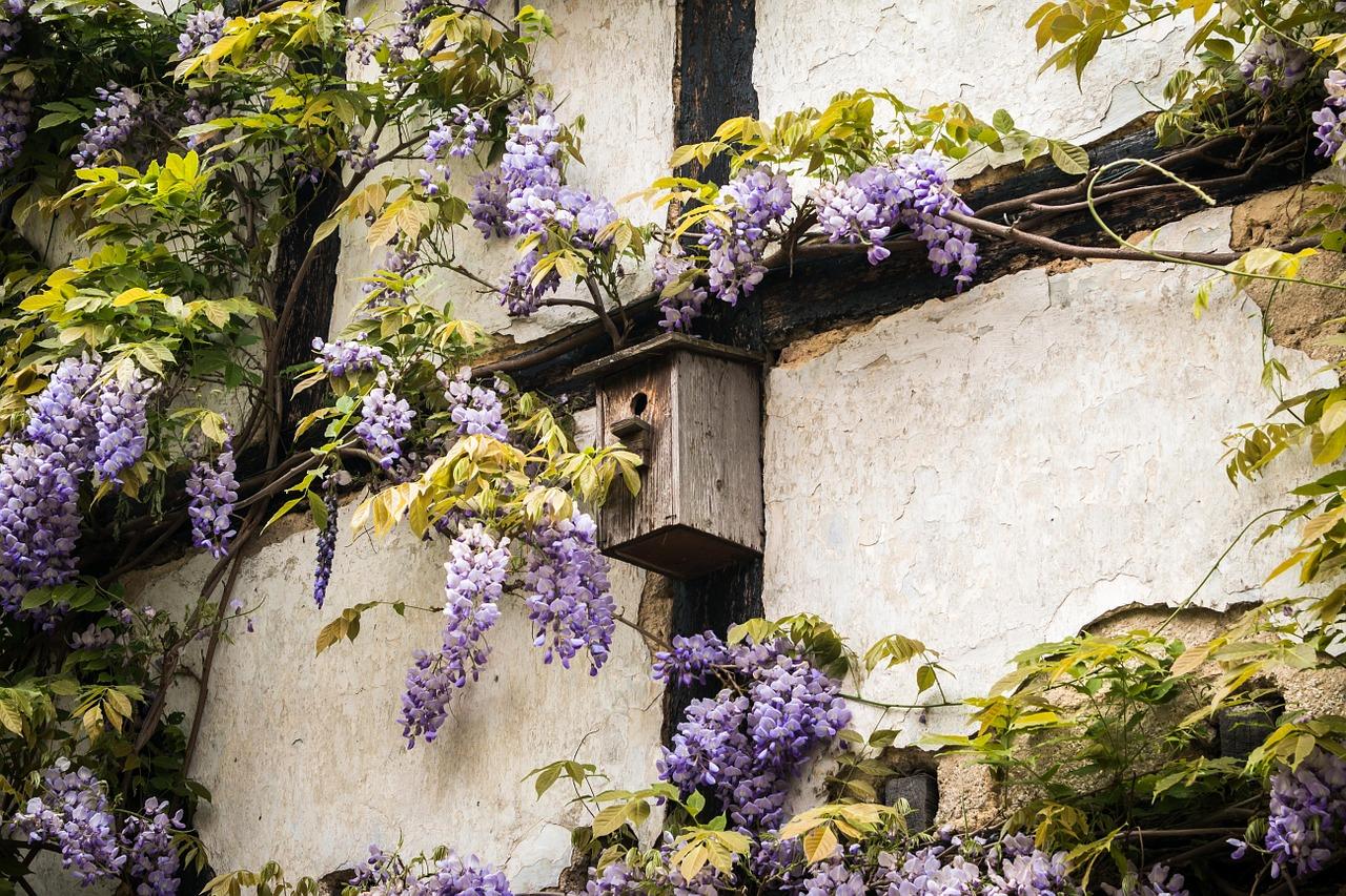 aviary, truss, wisteria