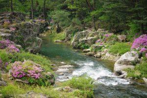 azalea, brook, water