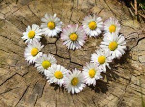 daisy, heart, flowers