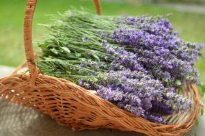 lavender, basket, bee