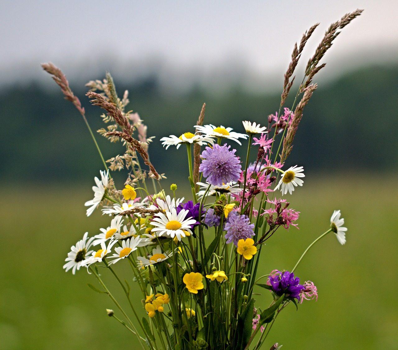 flowers, bouquet, wild flowers