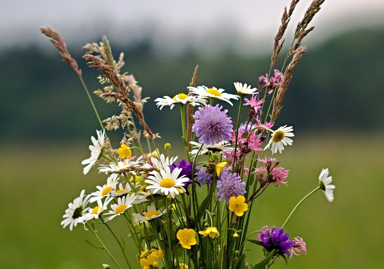 flowers, bouquet, wild flowers